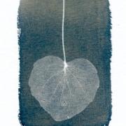 sydänjuuret