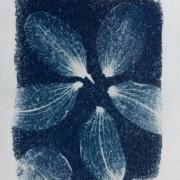 syanotypiavedos-1