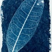 syanotypiavedos-2